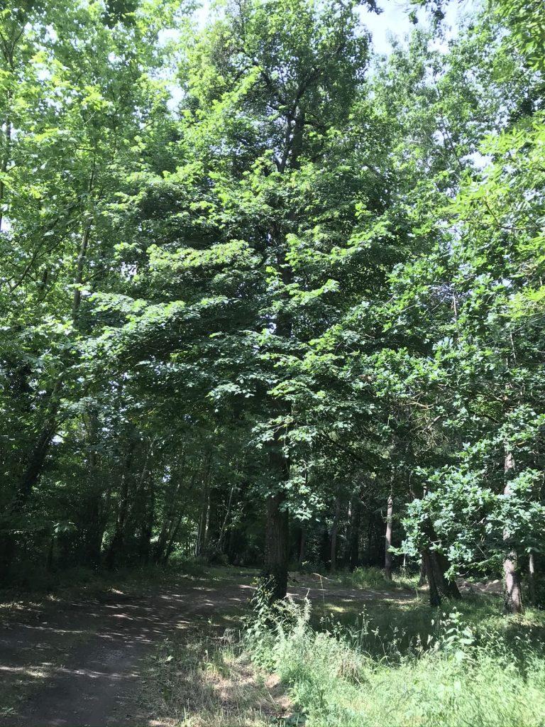 Chemin forestier à la 3CS